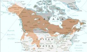 Gray Jay range map